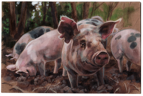Pigs09