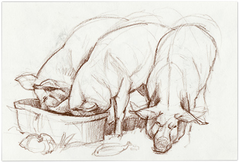 Pig-sketches2