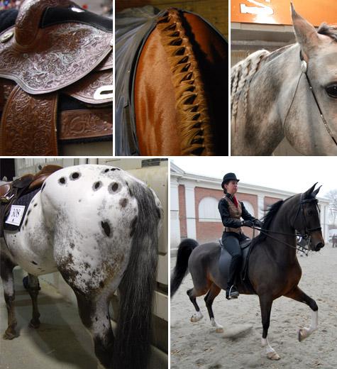 Equine-affair09-A
