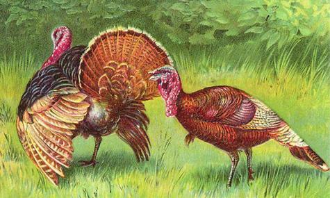 Turkey09-1