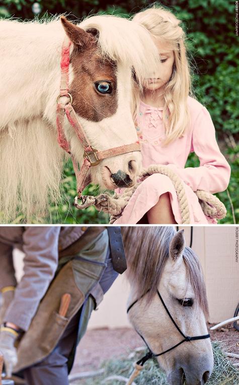 Rouxby-horses
