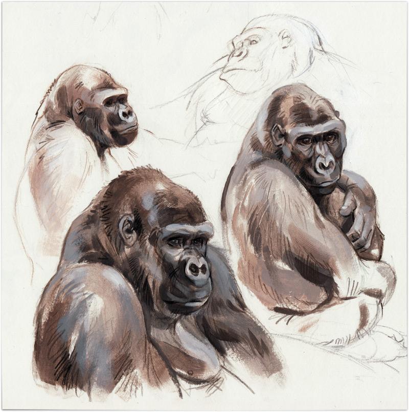 Zoo-gorillasSM