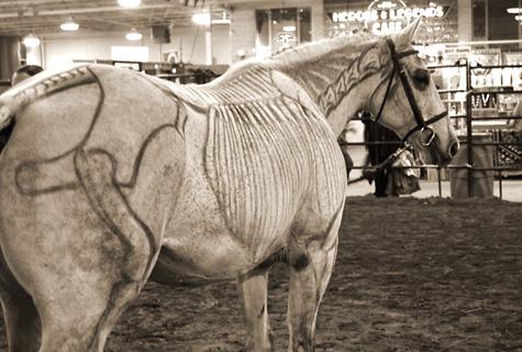 Equine-affair-B2