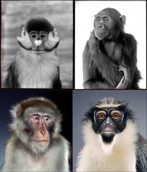 Monkey-COMP-B