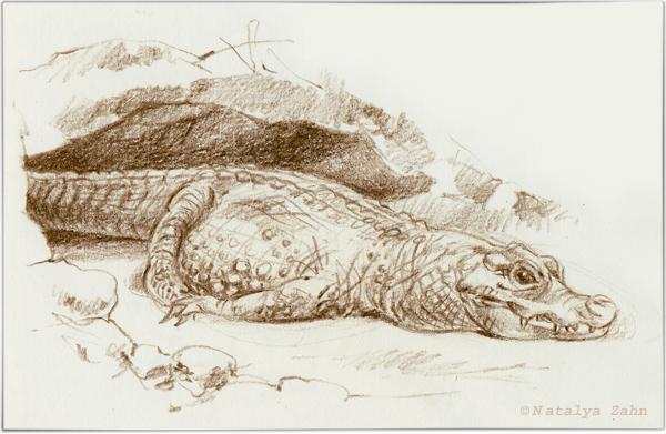Franklin Park Zoo pygmy crocodile