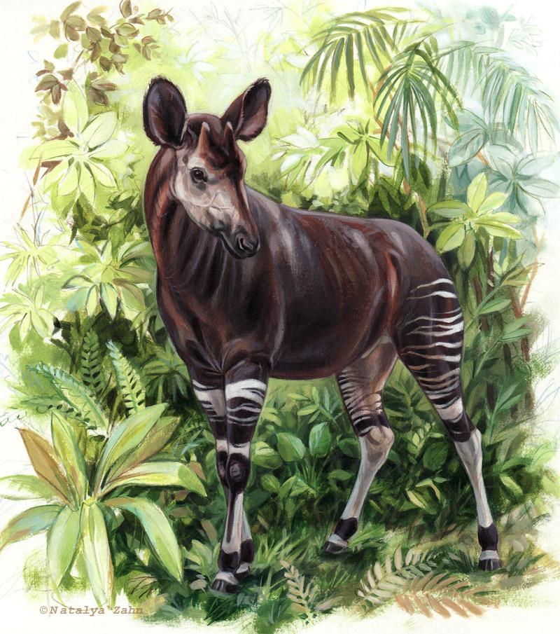 Okapi-SM