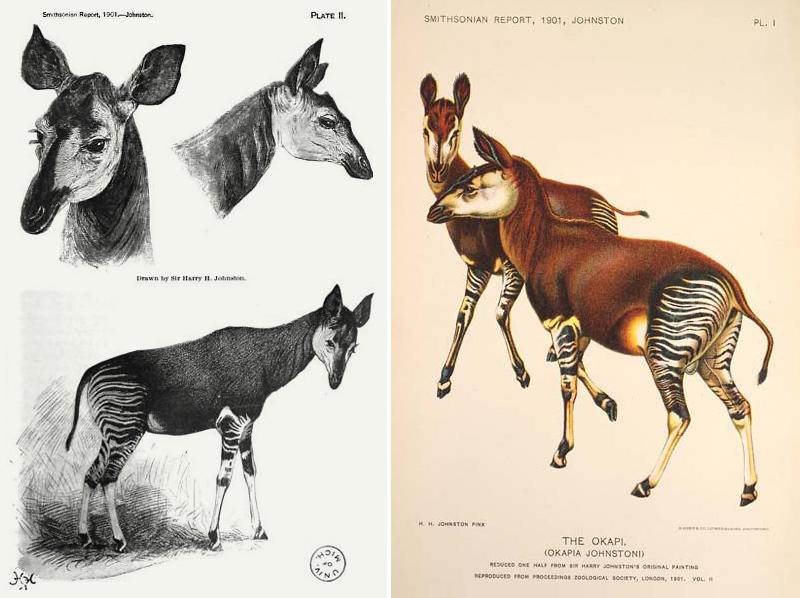 Okapi-sirCOMP