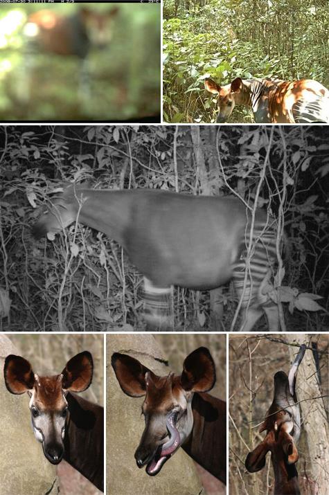 Okapi-photoCOMPb