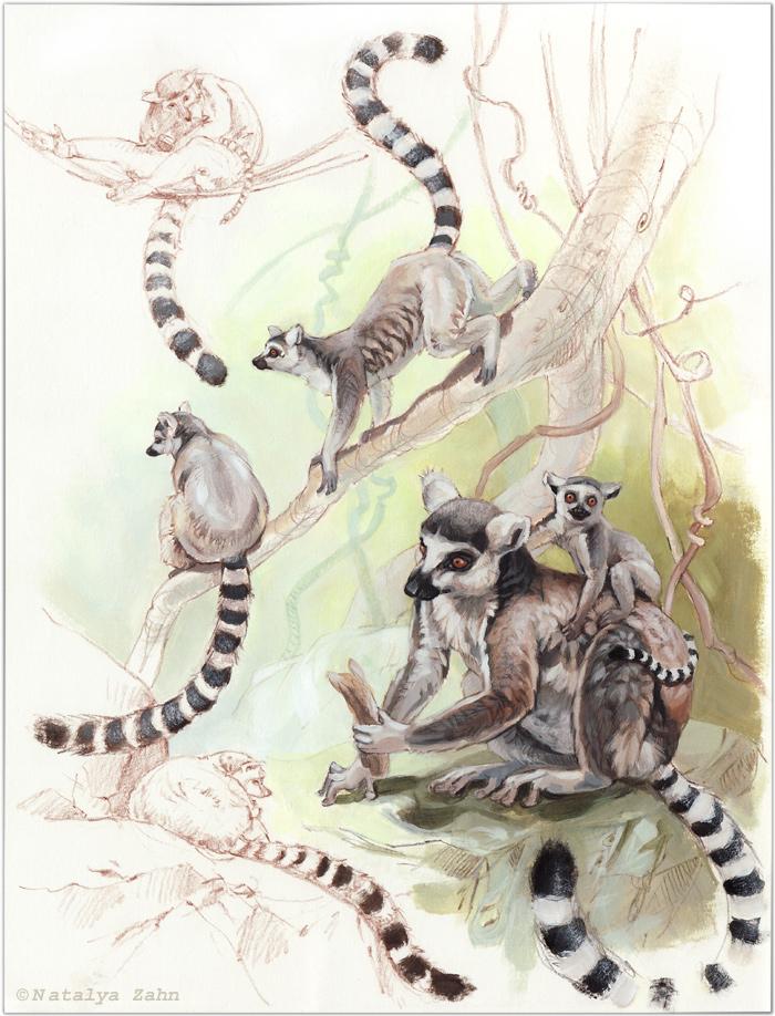 Zoo-lemursSM-COLOR