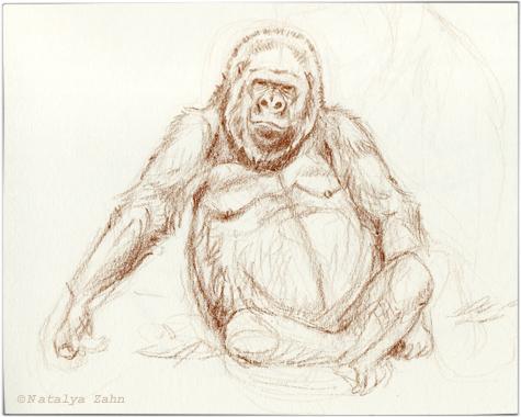 Bronx-gorillaSM
