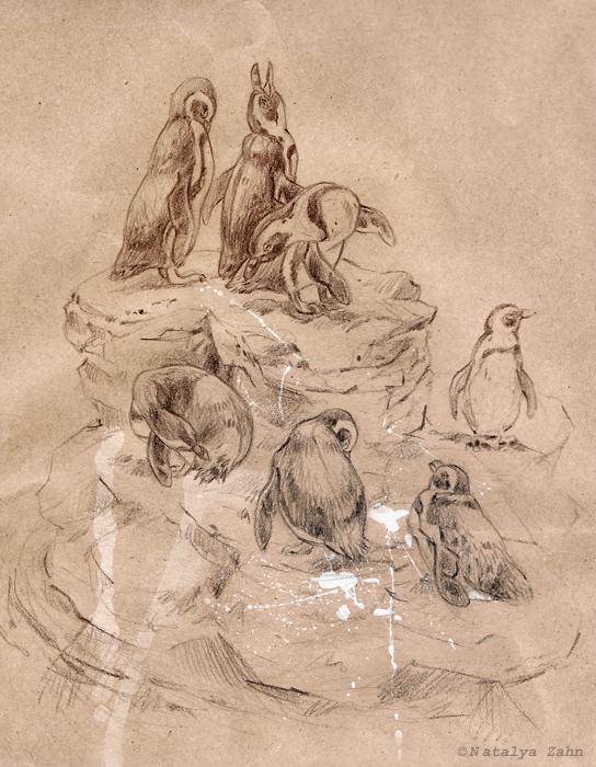 NEQ-penguins-onrocksSM