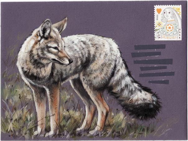 SMgrey-fox-MAIL