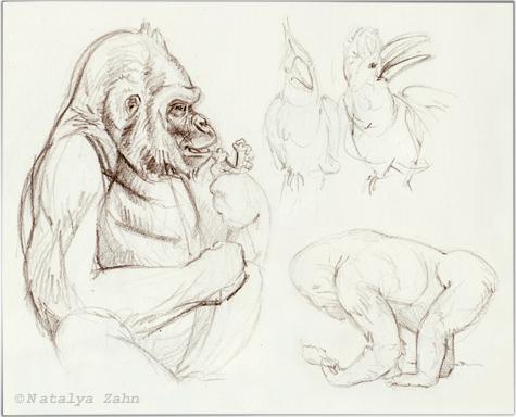 gorilla, Franklin Park Zoo, Kitombe