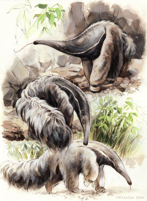 ZM-zoo-Anteater