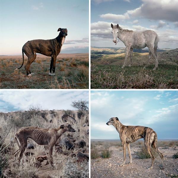 Daniel Naude, Animal Farm
