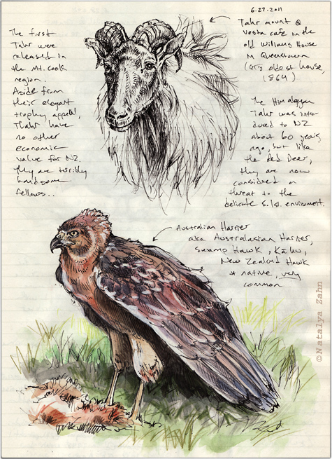 Australian Harrier and Himalayan Tahr