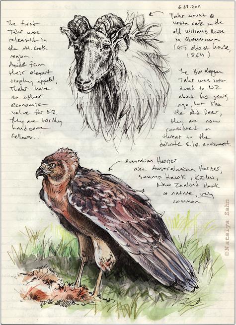 Australian Harrier and Himalayan Tahr