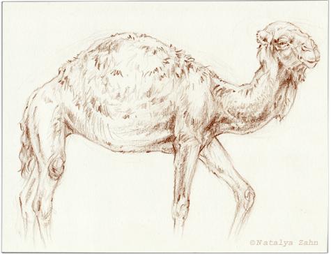 Zoo-Bronx-camel-SM