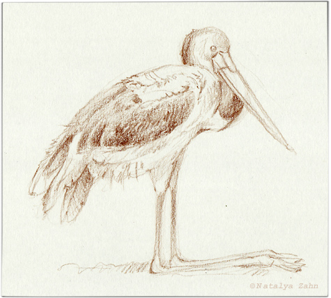 Zoo-Bronx-bird2-SM