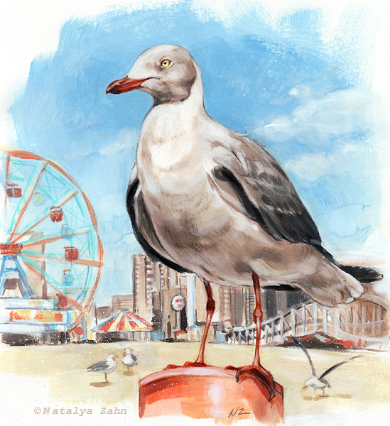 Gray-hooded Gull at Coney Island