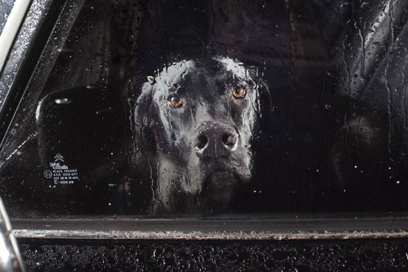 Martin Usborne, Dogs in Cars