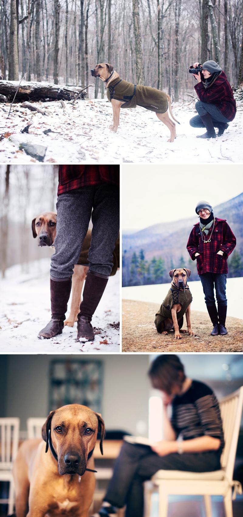 Rhodesian Ridgeback, Oscar dog, Vermont