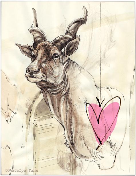 HMNH, Museum of Comparative Zoology, eland