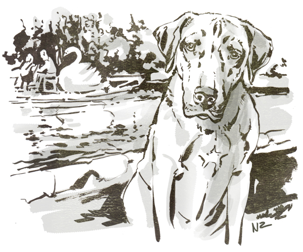 Rhodesian Ridgeback, dog, Boston, illustration