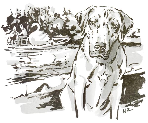 Rhodesian Ridgeback, dog, Boston, illustration