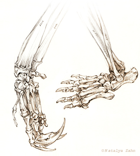 MCZ-anteater-feet-SM