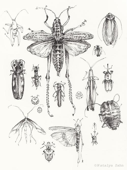 MCZ-Beetles-SM