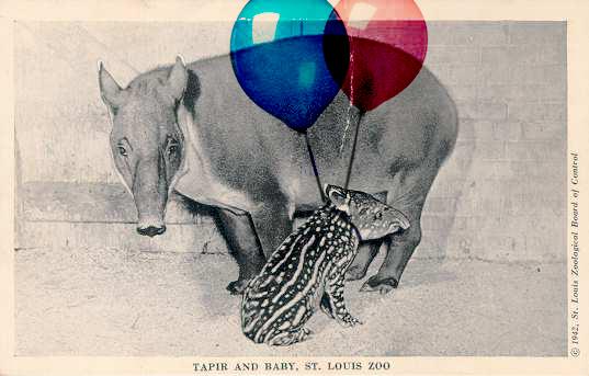 World Tapir Day, tapir
