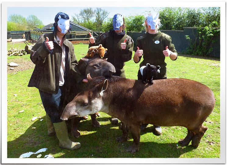 UK-Tapirs