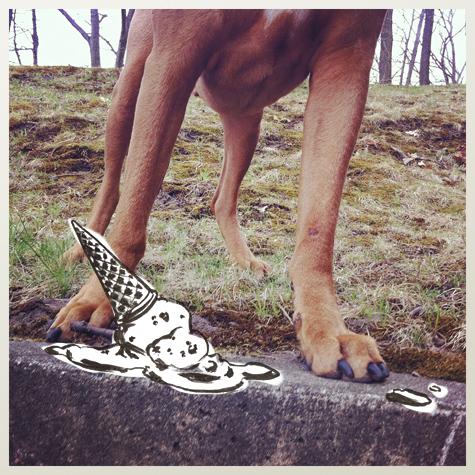 Rhodesian Ridgeback Oscar dog