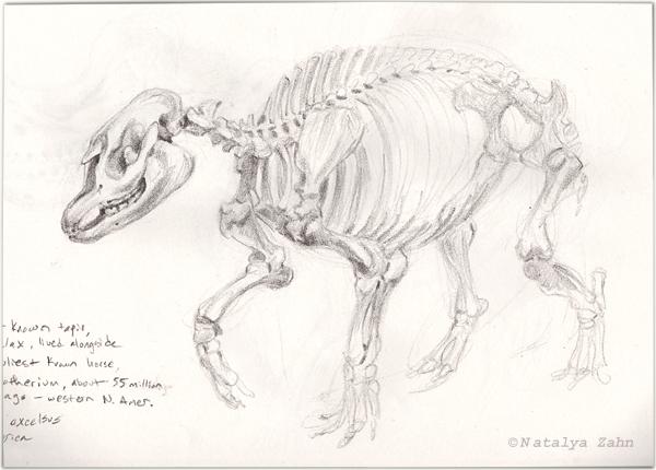 TapirSkeleton-SM