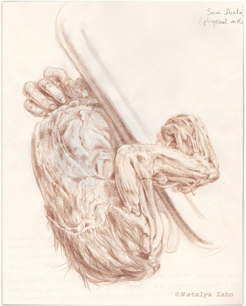 scientific illustration, baby orangutan