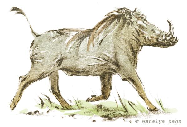 Warthog, African Warthog, wild pig