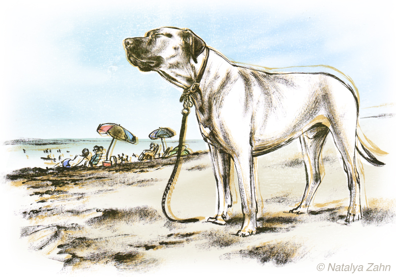 Rhodesian Ridgeback Oscar on a Cape Cod beach