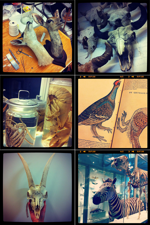 HMNH, Museum of Comparative Zoology, MCZ, exhibits