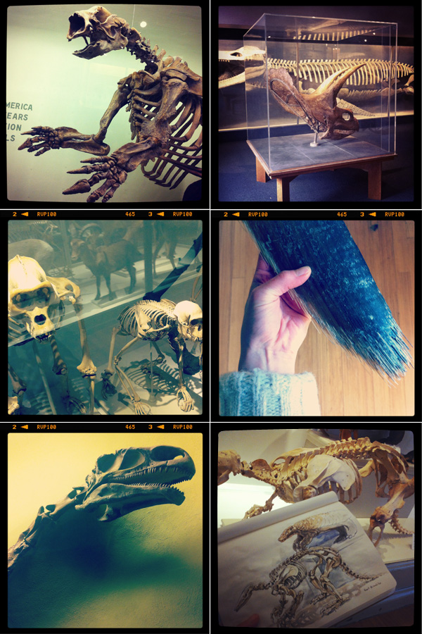 HMNH, Museum of Comparative Zoology, skeletons, dinosaurs