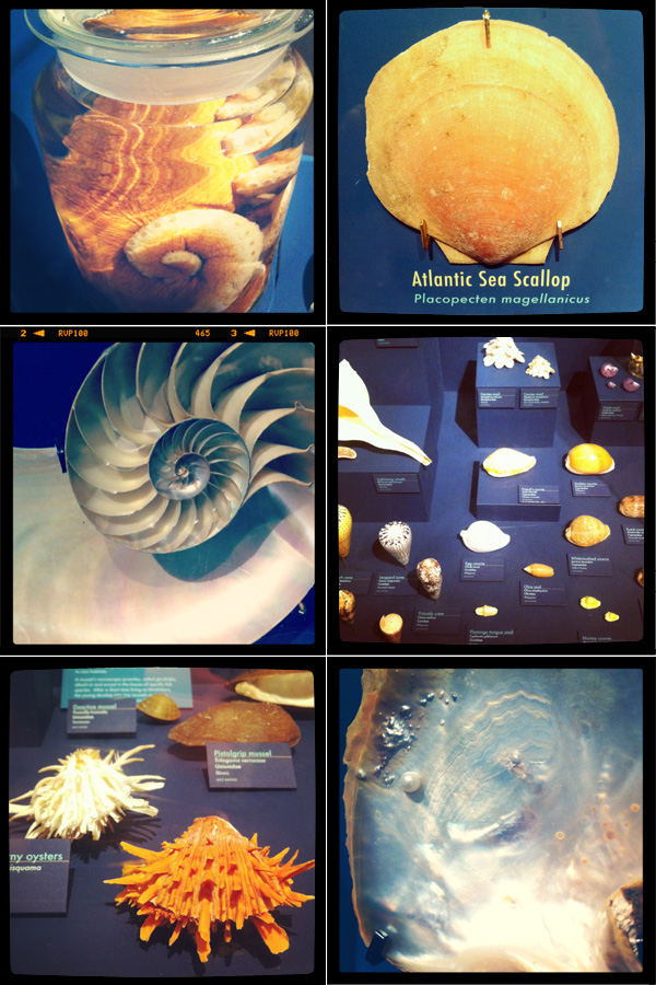 HMNH, Museum of Comparative Zoology, mollusks, seashells