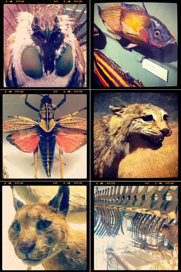 HMNH, Museum of Comparative Zoology