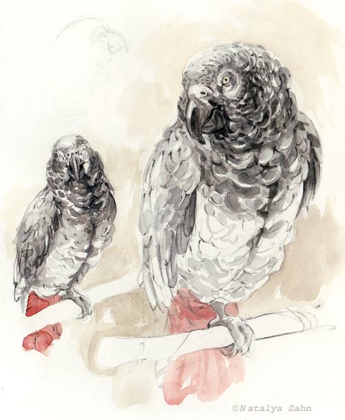 RISD, SCBWI, RISPCA, african grey parrot