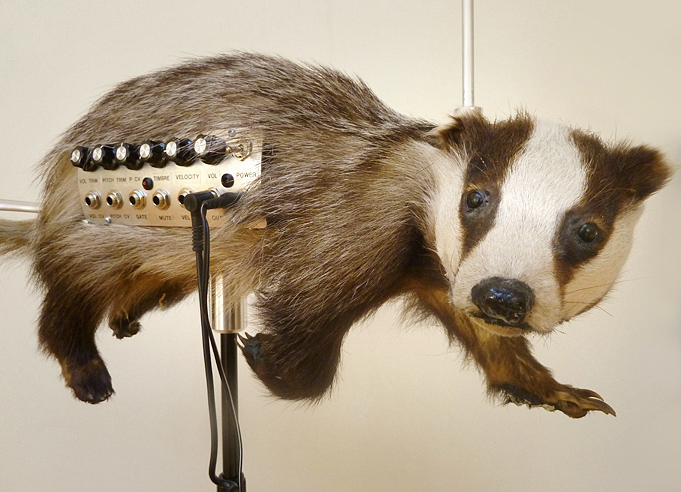 Badgermin2
