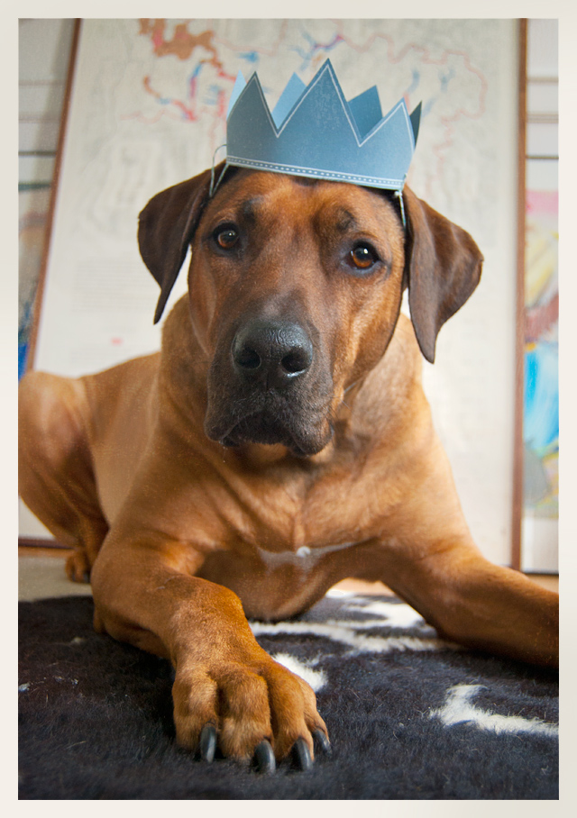 Rhodesian Ridgeback, Oscar dog