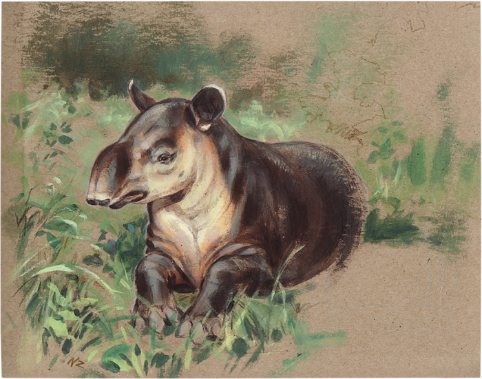 Tapir illustration, Baird's Tapir
