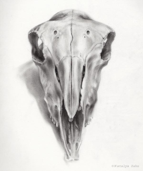 MorbitAnat-CarbonSkull-SM