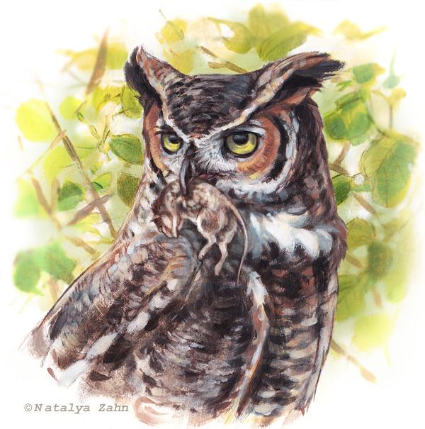 Great Horned Owl, owl pellet, owl