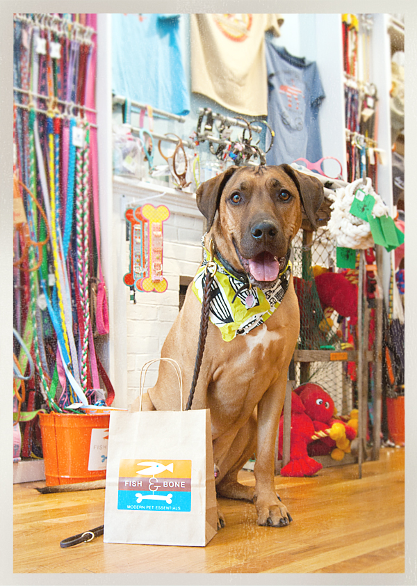Fish & Bone Boston, pet boutique, dog treats