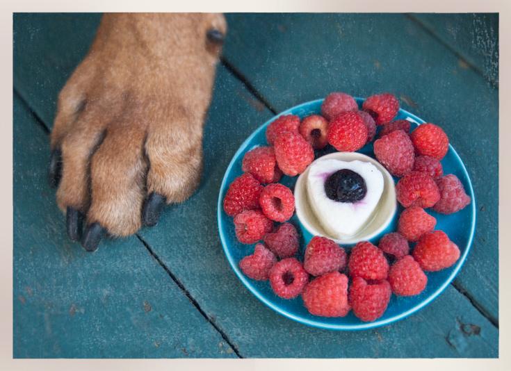 Yogurt-Paw